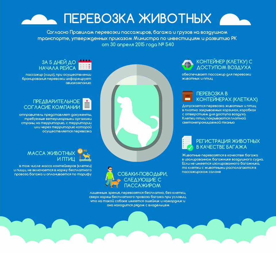 Правила перевозки животных в Казахстане