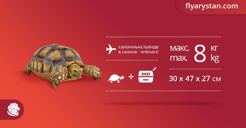Перевозка животных в FlyArystan