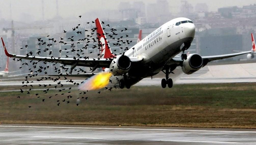 Авиакомпании России рассказали о столкновениях самолетов с птицами