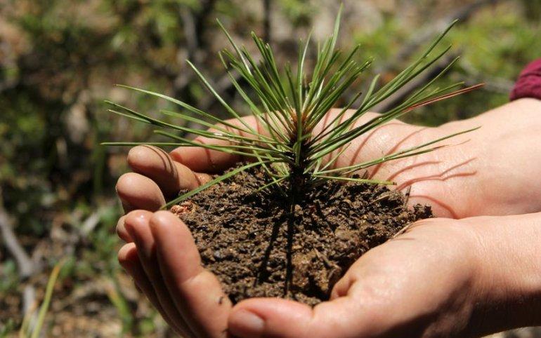 Авиакомпания S7 собрала деньги на посадку миллиона деревьев в Сибири