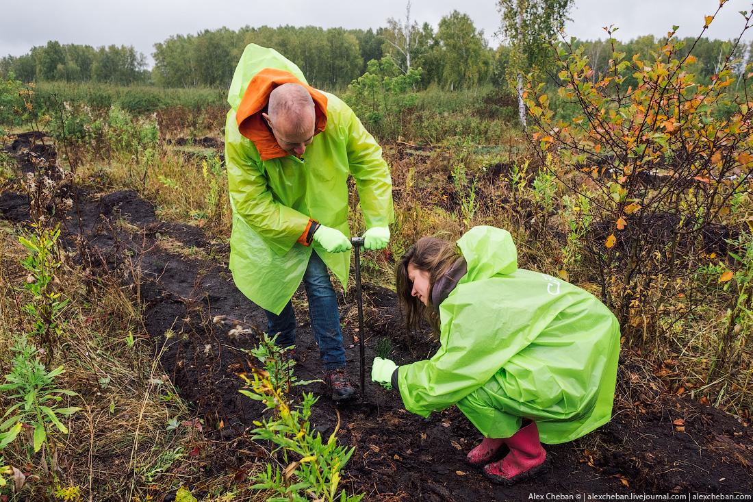 Авиакомпания S7 посадила первые 20 000 деревьев